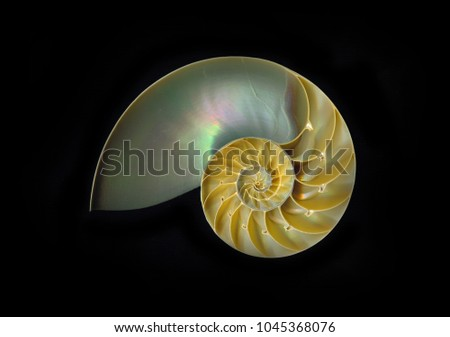 Split chambered nautilus with inner iridescent shell showing, isolated on black.