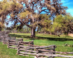 Split rail zig zag fence in front of a beautiful oak tree