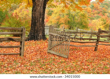 Split railed fence and open gate leading into a field with a maple tree and beautiful fall colors.