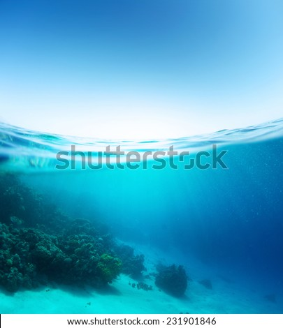 Split shot of the coral reef underwater and sea surface with waves - Shutterstock ID 231901846