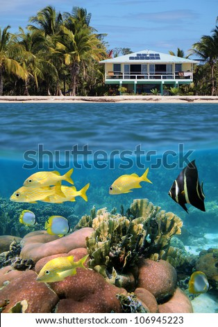 Split view above and below water surface of a beach house and its underwater coral garden with tropical fish, Caribbean sea