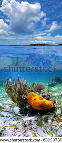 Split view in the Caribbean sea with cloudy blue sky, and underwater, sea sponge with sea rod coral and feather duster worm, Panama