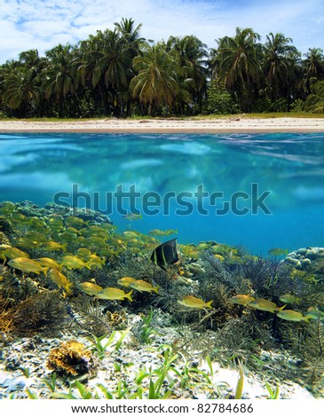 Split view of a tropical beach with coconut palm trees and under water surface a shoal of fish in a coral reef, Caribbean sea, Panama