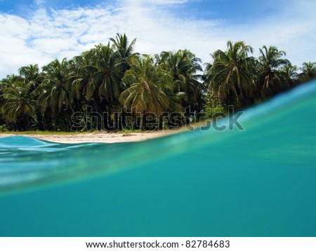 Split view of tropical beach with coconut palm trees and underwater part with blue water of the Caribbean sea, Zapatillas islands, Panama