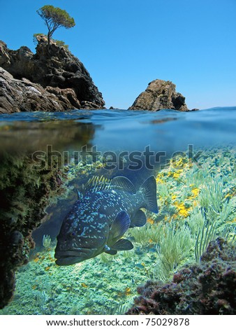 Split view with rocky island and under water a dusky grouper, Medes islands, Mediterranean sea, Costa Brava, Catalonia, Spain - stock photo