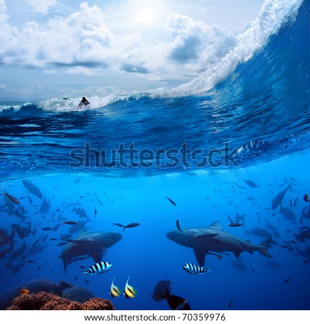 Splitted two parts image extreme sport in ocean and a surfer that sliding a surfing board on wave  and angry hungry bull-sharks swiming underwater