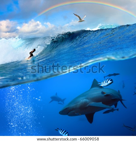 Splitted two parts image extreme story about the ocean and the surfer that sliding a surfing board on wave  and angry hungry bull-shark swimming underwater underneath him