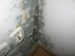 Splotches of mold in the corner of room in the old tenement house
