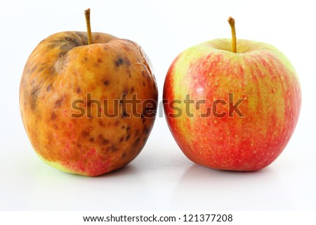 spoiled one bad red apple on white background Healthy and rotten apples
