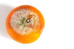 Spoilt grapefruit isolated on white background.