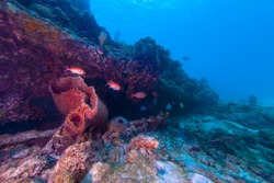 Sponges and black bar soldier fish along side the wreck of the Berwyn in Barbados