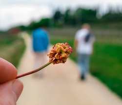 Spontaneous flower on a country road with blurred background