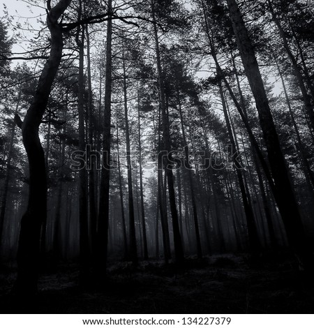 spooky abstract black and white forest in dusk time