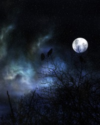 Spooky crows in winter