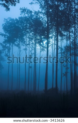 spooky fog filled forest at night