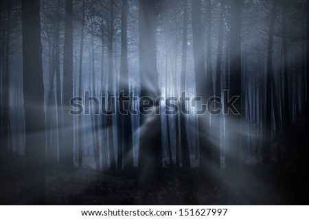 Spooky foggy forest at night with light beams