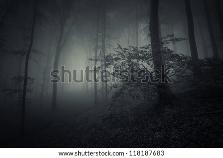 spooky forest landscape with huge tree