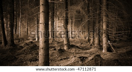 Spooky forest with dry trees in sepia