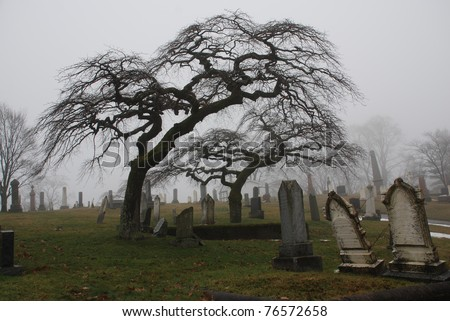 Spooky graveyard scene complete with scary trees and deep fog