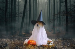 Spooky Halloween theme photo: Golden Retriever with the ghost mask and witch hat sitting with the human skull and pumpkin in the horror wood.