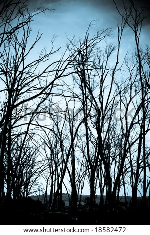 Spooky haunted forest with dead trees