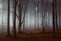 Spooky light in foggy forest