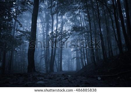 spooky misty rainy forest ...