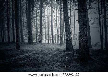 Spooky Night Forest with fog