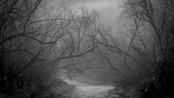 Spooky river forrest walk. winter fog through the trees