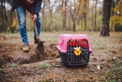 Spooky scene at the pet cemetery. The grave of lost animal friends. Companionship, farewell. A man brings a dead pet in a carrier to the forest and digs a grave with a shovel. Loss of a Pet.