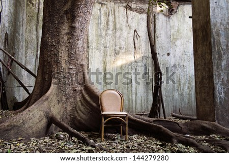 spooky tree and the chair with the old wall on background