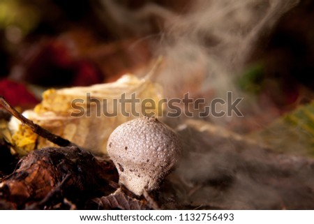 Spores coming out of a mushroom