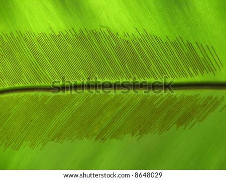 Spores on tropical palm leaf