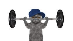 Sport. Cat is going to do exercise with weight -- isolated on white