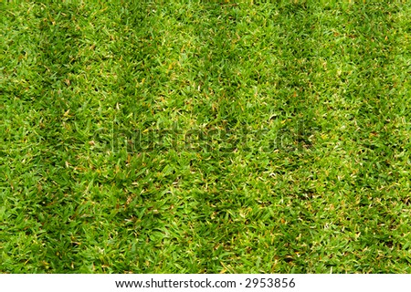 sport grass patch - stock photo