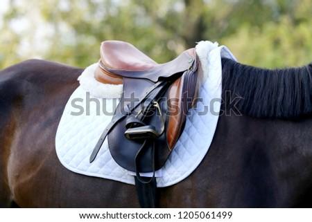 Sport horse close up under old leather saddle on dressage competition. Equestrian sport background.