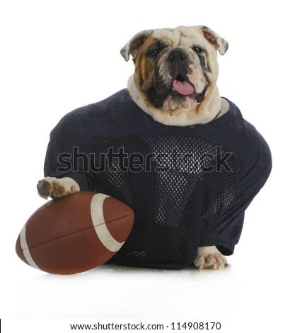 sports hound - english bulldog dressed up like a football player