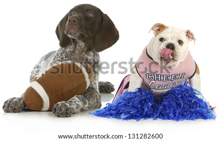 sports hounds - german shorthair pointer and english bulldog football fans isolated on white background