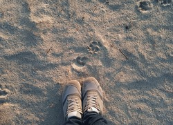 Sports women's light gray sneakers on wet sand with shadows from the setting sun. The concept of evening or morning jogging, fitness and workout. Dog footprint. Top view, copy space.