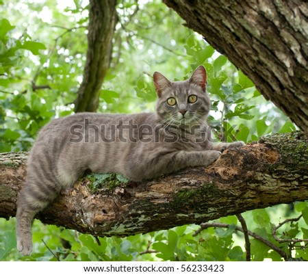 Spotted blue tabby cat on tree branch