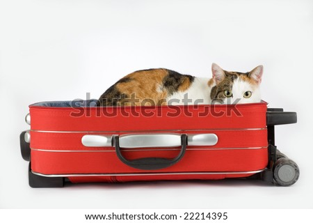 stock photo : spotted cat in the suitcase, isolated