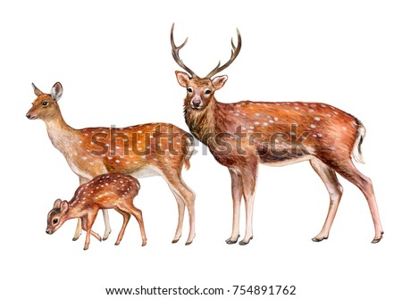 spotted deer  family. female ...