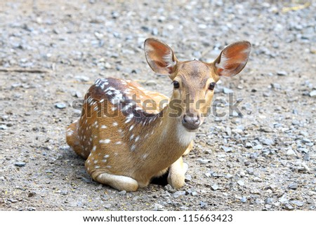 Spotted deer in the zoo of Thailand