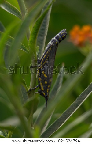 Spotted grasshooper on plant