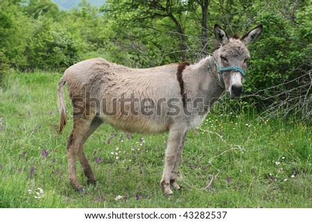 Spotted grey donkey - stock photo