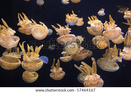Spotted Jelly - stock photo