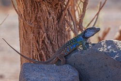Spotted lizard enjoying sunlight on the stone on the natural blurred background, selective focus.