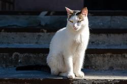 Spotted street cat walks. Yard cat. A pet. Stray cat.