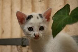 Spotty barn kitten looking into camera portrait