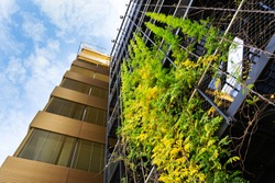 Sprawling plants on outdoor green living wall, vertical garden on modern office building facade on sunny day, low angle view, copy space